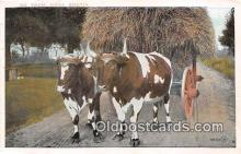 cow000063 - Ox Team Nova Scotia Postcard Post Card