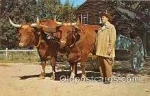 cow000069 - Farmer, Old Sturbridge Village Sturbridge, Massachusetts, USA Postcard Post Card