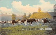 cow000073 - Postcard Post Card