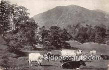 cow000076 - Nab Scar, Rydal  Postcard Post Card