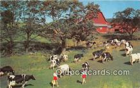 cow000077 - Postcard Post Card