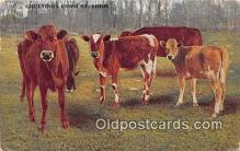 cow000085 - St Louis, MO, USA Postcard Post Card