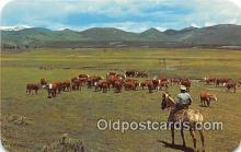 cow000106 - Cowboy & Cattle Color by Clatworthy Colourvues Postcard Post Card