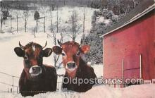cow000108 - Winter Vermont Farm Postcard Post Card