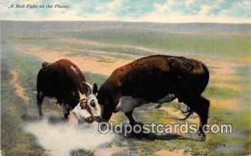 cow000109 - Bull Fight Plains Postcard Post Card