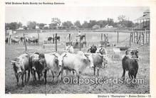 cow000126 - Wild Brahma Bulls Stryker's Photogloss Postcard Post Card
