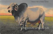 cow000130 - Brahman Bull Florida Pastures, USA Postcard Post Card
