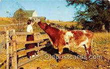 cow000139 - Country Scene on the Farm  Postcard Post Card