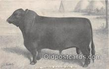 cow000144 - Champion Blackcap King Lov Burke Postcard Post Card