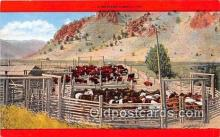 cow000167 - Western Corral  Postcard Post Card