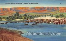 cow000168 - Cattle, Ole Southwest Crossing Rio Grande Postcard Post Card
