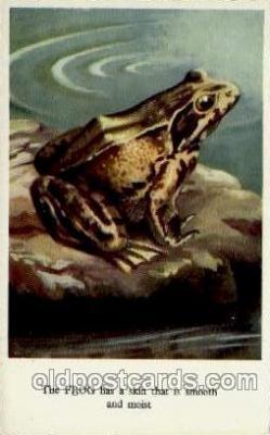 dan001015 - Frog Postcard Post Card