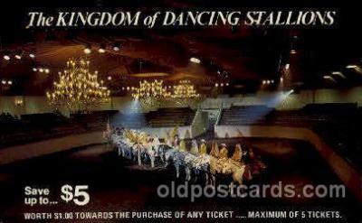 Dancing stallions