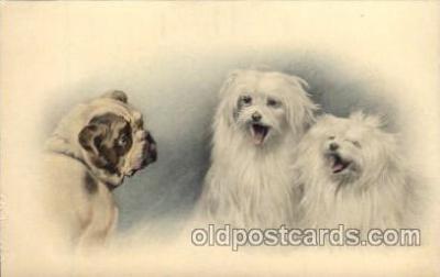 dog100056 - Dog, Dogs, Postcard Post Card