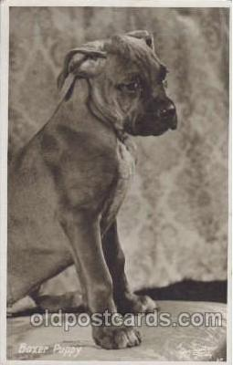 dog100211 - Boxer Dog, Dogs, Postcard Post Card