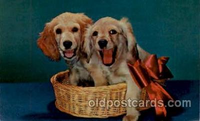 dog100240 - Dog, Dogs, Postcard Post Card