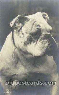 dog100277 - Dog Postcard Post Card