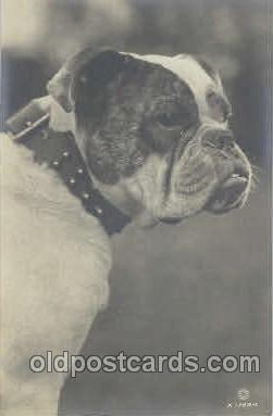 dog100307 - Dog Postcard Post Card