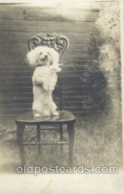 dog100320 - Dog Postcard Post Card