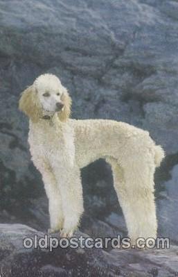 dog100340 - Dog Postcard Post Card