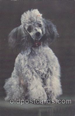 dog100350 - Dog Postcard Post Card