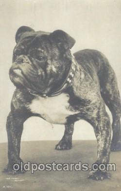 dog100352 - Dog Postcard Post Card
