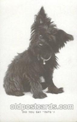 dog100362 - Dog, Dogs Postcard Post Card