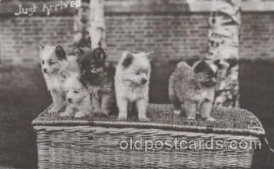 dog100375 - Dog, Dogs Postcard Post Card