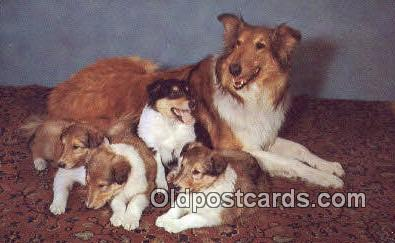 dog100609 - Collie Postcard, Dog Post Card, Old Vintage Antique