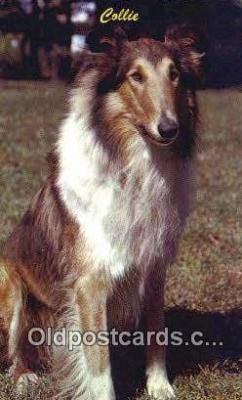 dog100654 - Collie Postcard, Dog Post Card, Old Vintage Antique