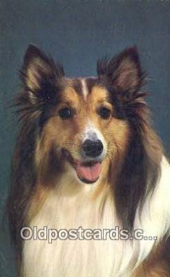 dog100655 - Collie Postcard, Dog Post Card, Old Vintage Antique