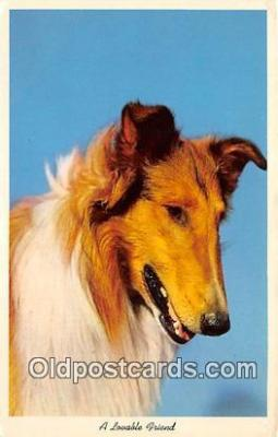 dog100757 - Lovable Friend  Postcard Post Card