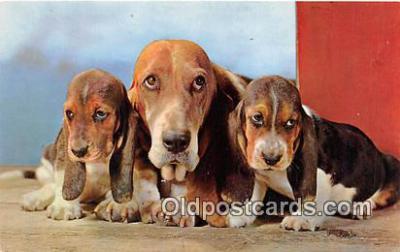 dog200072 - Basset Hounds Alfred Mainzer, Inc Postcard Post Card
