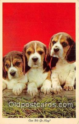 dog200348 - Postcard Post Card