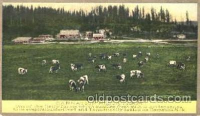 dry001003 - Carnation Stock FarmDairy, Cow Cows, Postcard Post Card