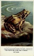 dan001015 - Frog Postcard Post Card