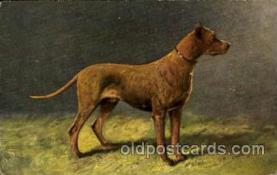 dog100032 - Dog, Dogs, Postcard Post Card