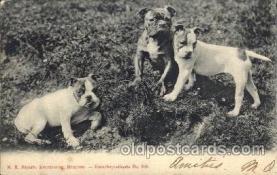 dog100070 - Dog, Dogs, Postcard Post Card