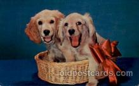 dog100082 - Dog, Dogs, Postcard Post Card