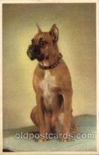 dog100138 - Dog, Dogs, Postcard Post Card
