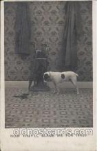 dog100192 - Dog, Dogs, Postcard Post Card