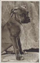 dog100211 - Boxer Dog, Dogs, Postcard Post Card