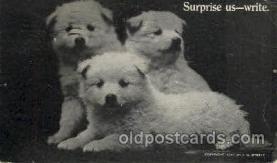 dog100229 - Dog, Dogs, Postcard Post Card