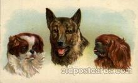 dog100241 - Dog, Dogs, Postcard Post Card