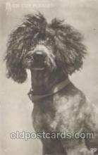 dog100256 - Dog Postcard Post Card