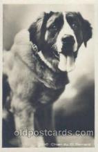 dog100259 - Dog Postcard Post Card