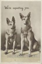 dog100269 - Dog Postcard Post Card