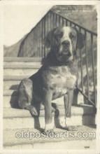 dog100272 - Dog Postcard Post Card