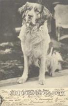 dog100273 - Dog Postcard Post Card