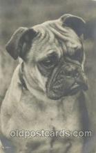 dog100283 - Dog Postcard Post Card